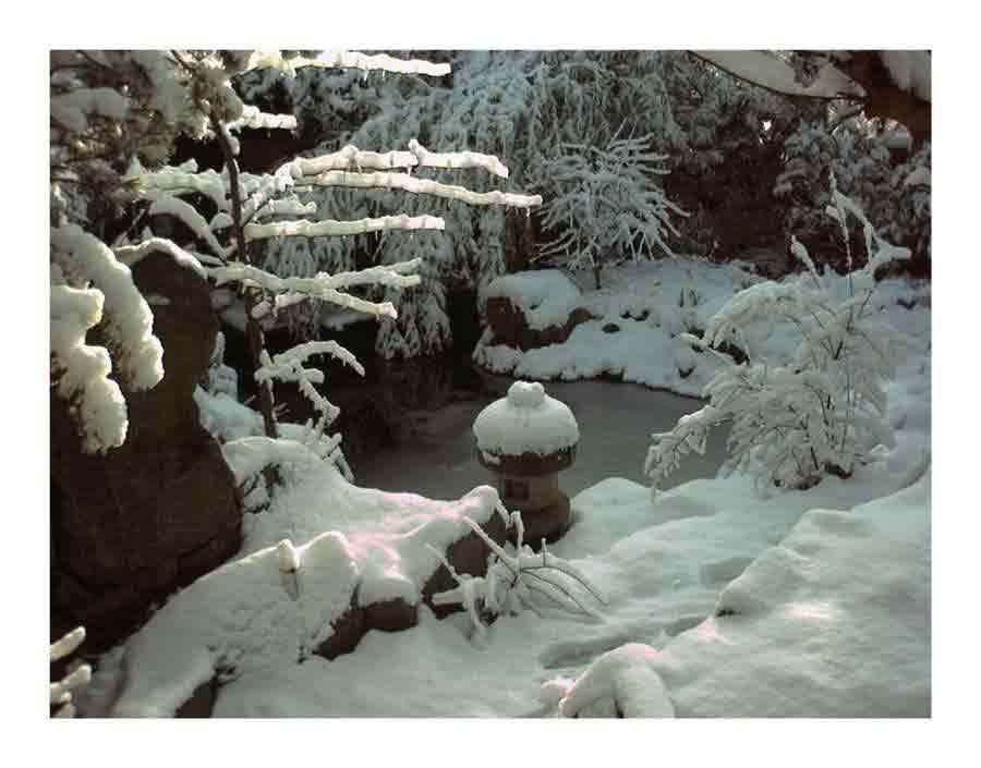Bruno krauss collection ausstellung for Koi teich winter